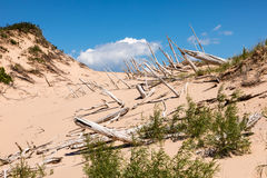 Ghost Forest of Sleeping Bear Dunes Royalty Free Stock Photos
