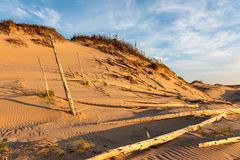 Ghost Forest of Sleeping Bear Dunes National Lakeshore Stock Image