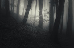 Ghost on Halloween in mysterious dark forest with foH Royalty Free Stock Images