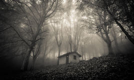 Ghost house in the misty forest. Photo of ghost house in the misty forest Stock Photos
