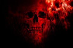 Ghost. Human skull in the woods,Horror Background For Halloween Concept And Movie Poster Project Stock Photography