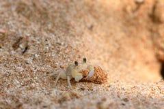 Ghost marche en crabe sur la plage de Koggala dans Sri Lanka Photos stock
