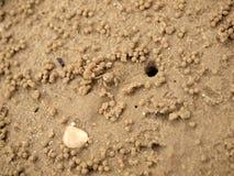 Ghost minuscule marche en crabe les trous de creusement dans le sable photos libres de droits