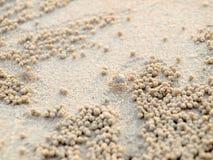 Ghost minuscule marche en crabe les trous de creusement dans le sable photo stock