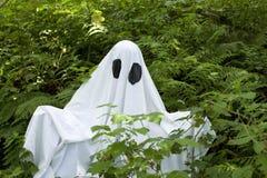 Ghost na floresta Imagem de Stock