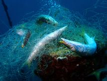Ghost nets are commercial fishing nets that have been lost, abandoned, or discarded at sea. royalty free stock photo