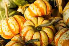 Ghost Rider Squash. Ghostrider squash at a farmers market Royalty Free Stock Image