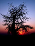 Ghost tree Stock Images