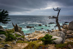 The Ghost Tree and the Pacific Ocean  Stock Images