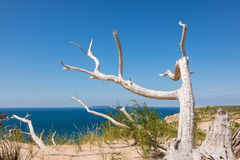 Ghost Tree at Sleeping Bear Dunes in Empire Michigan. An ancient, weathered tree, rises from the sands of Sleeping Bear Dunes. Lake Michigan and South Manitou Stock Photography