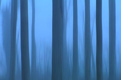 Ghost trees. Trees in a foggy forrest stock image