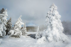 Ghost trees and Thermal pool, Yellowstone Stock Image