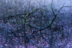 Ghostly Forest Branches Stock Photography