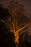 Ghostly gum tree at night Stock Photos