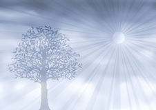 Ghostly silver tree. (other landscapes are in my gallery Royalty Free Stock Photography