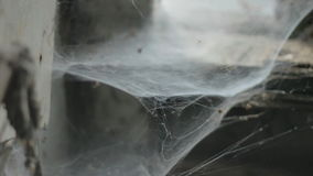 Ghostly Spider Web Cobweb stock video footage