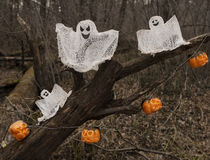 Ghosts and pumpkins in the forest 2 Stock Photos