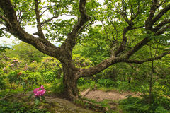 chubbys lone tree
