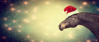 Ghristmas background with black horse and Santa hat, banner royalty free stock photos
