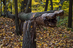 Giù albero Fotografia Stock Libera da Diritti