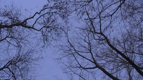 Giù il colpo superiore degli alberi e degli uccelli lentamente commoventi sull'uguagliare il fondo di tramonto video d archivio