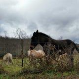 Giù nell'azienda agricola Fotografia Stock Libera da Diritti