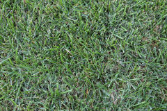 Giù punto di vista diritto di erba verde Fotografia Stock Libera da Diritti