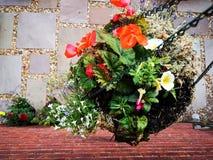 Giù-vista di un canestro d'attaccatura in pieno delle piante fotografie stock