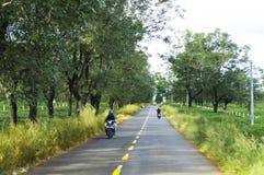 Gia Lai, Vietnam - 24. November 2018: Die schöne Straße überschreitet durch Teebauernhof Gia Lai Province, Vietnam stockbilder
