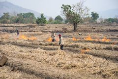 Gia Lai Wietnam, Marzec, - 12, 2017: Wsi pole z ogieniem robić z suchą ryżową słomą w Gia Lai, środkowy średniogórze Wietnam Fotografia Stock