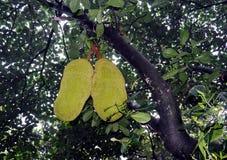 Giaca che appende sull'albero Fotografie Stock Libere da Diritti