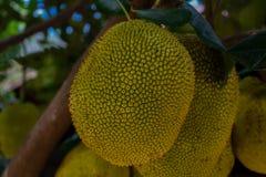 Giaca tropicale sull'albero fotografia stock libera da diritti