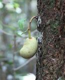 Giaca in una foresta Fotografia Stock Libera da Diritti