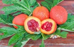 Giaca, zucca amara coperta di spine, frutta rossa del gac Erba della frutta di Gac per la pelle di bellezza La frutta è disponibi immagini stock