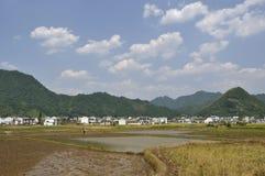 Giacimenti del riso Immagini Stock Libere da Diritti
