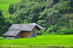 Giacimenti del riso del terrazzo Fotografie Stock