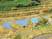 Giacimenti del riso del terrazzo immagine stock libera da diritti