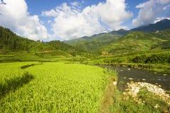 Giacimenti del riso del Vietnam Immagine Stock