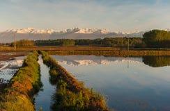 Giacimenti del riso di Vercelli fotografia stock libera da diritti