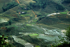 Giacimenti del riso nel Vietnam 1 Fotografia Stock Libera da Diritti