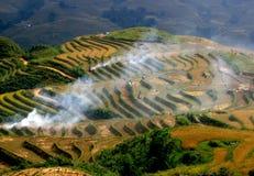 Giacimenti del riso, Vietnam Fotografia Stock Libera da Diritti