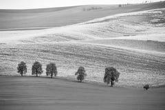 Giacimenti della colza in colline di Ceco Moravia Terreni arabili in primavera Fotografia Stock