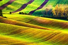 Giacimenti della molla di rotolamento Terreni arabili in Ceco Moravia Fotografia Stock Libera da Diritti