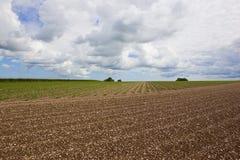 Giacimenti della patata dei wolds di Yorkshire Immagine Stock Libera da Diritti