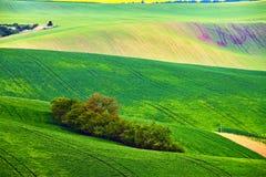 Giacimenti della primavera Onde verdi Paesaggio rurale naturale fotografie stock libere da diritti