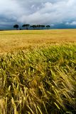 Giacimenti di cereale con alcuni alberi fotografie stock libere da diritti