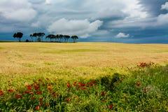 Giacimenti di cereale con alcuni alberi e fiori fotografia stock libera da diritti