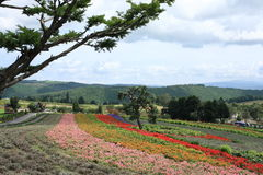 Giacimenti di fiore a Biei Fotografie Stock Libere da Diritti