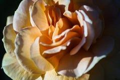 Giacimenti di fiore a Carlsbad Fotografie Stock Libere da Diritti