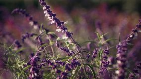 Giacimenti di fiore a Carlsbad Fotografia Stock Libera da Diritti